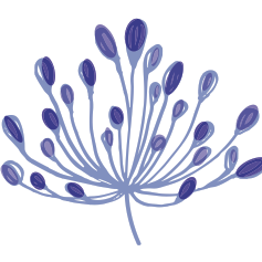 Fundraising Page: TEAM AGAPANTHUS